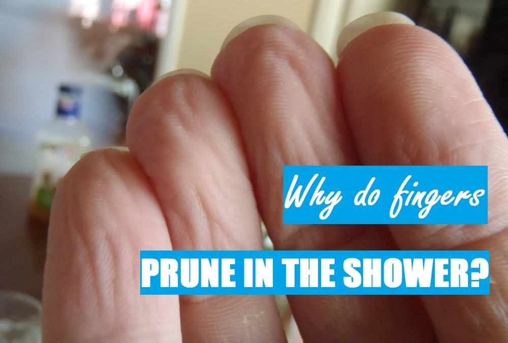 Why do fingers prune in the shower and bath?